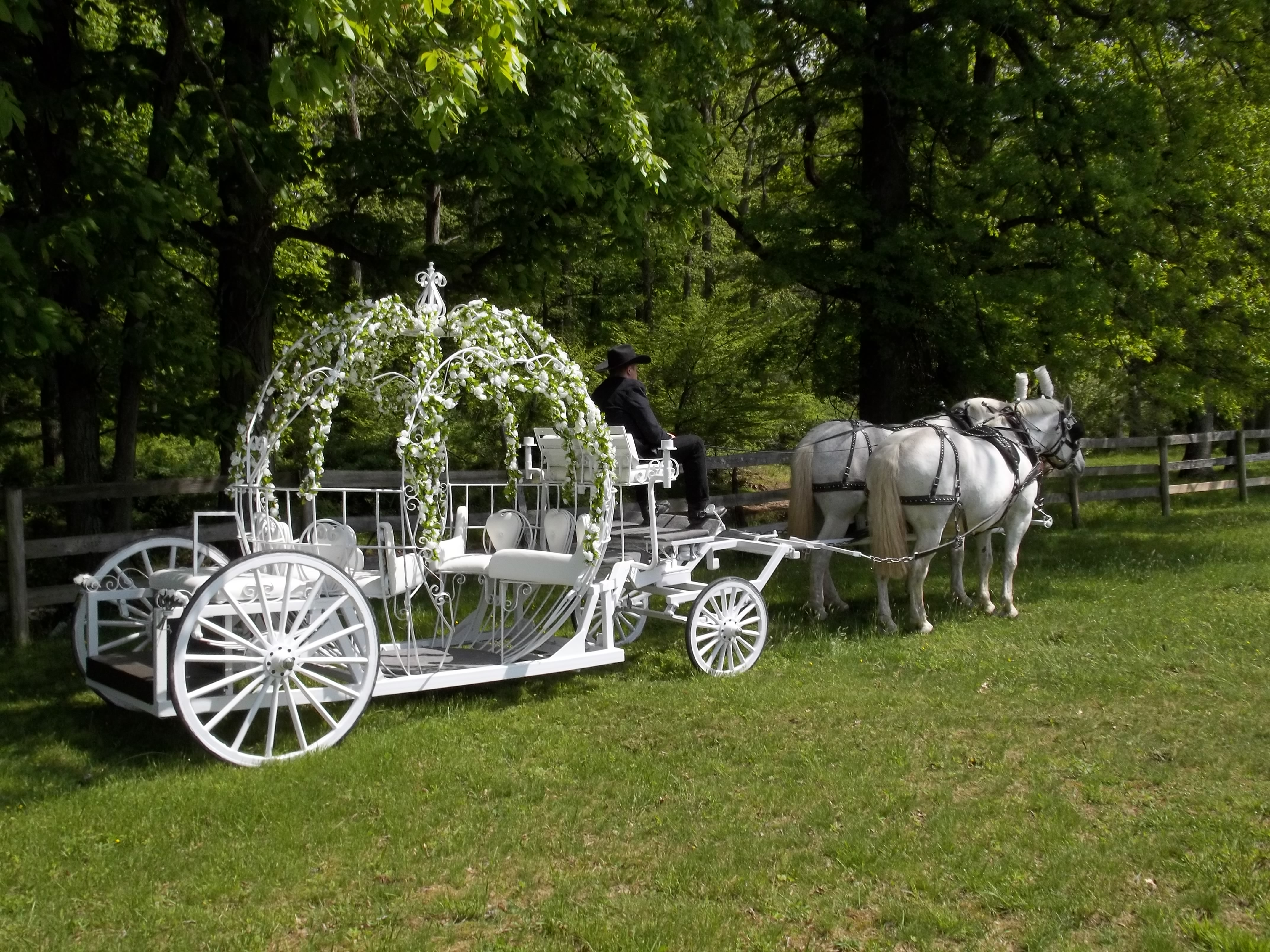 Horse Carriage Wedding Rental Nj Carriage Rides Cloverland