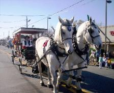 SURRIE CARRIAGE W/ BLK. OR WHITE HORSE TEAM