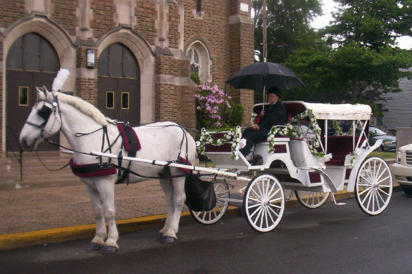 Horse Carriage Wedding Al Nj Rides Cloverland
